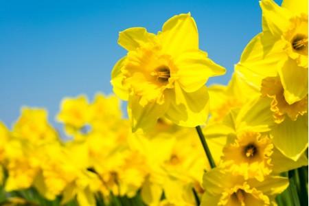 10 интересных весенних цветов для сада