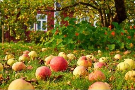 Что делать осенью в саду?