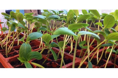 Готовимся к новому дачному сезону: 10 главных задач огородника на январь