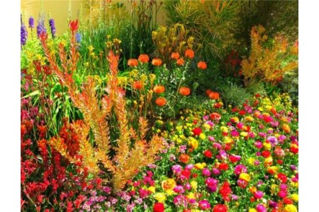 Ухаживаем за цветами в сентябре