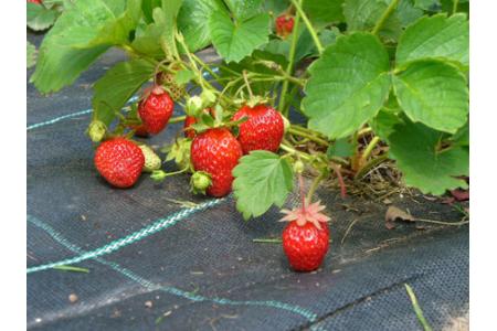 Материалы для защиты растений: Агротекс