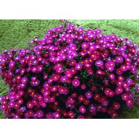 Краткие описания и фотографии популярных цветов