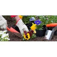 Новая статья о работах на загородном участке в июне
