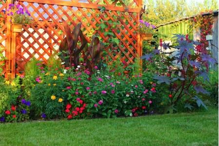 Подборка описаний популярных цветов