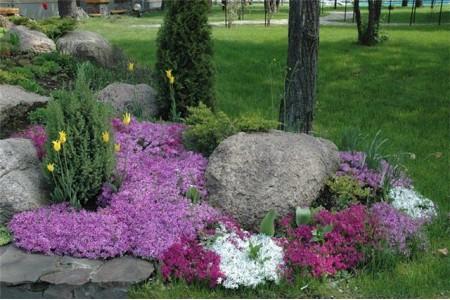 Подборка описаний популярных цветов. Часть 2