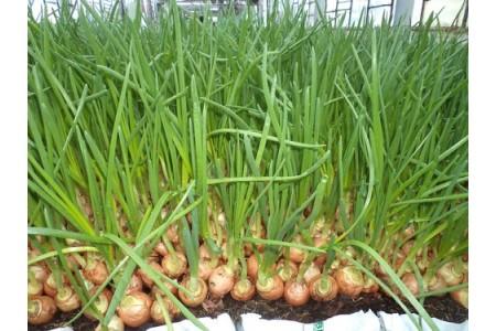 Февраль садовода и огородника: сажаем огурцы, перьевой лук, петрушку, сельдерей и кинзу