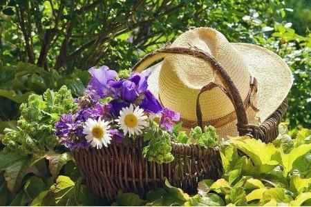 О летних работах на загородном участке: Июнь