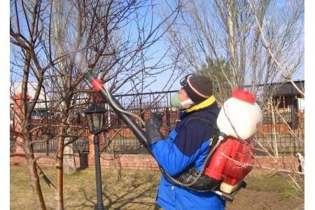Апрель: опрыскиваем деревья и кустарники