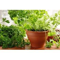 Февраль: сажаем первые огурцы и зелень