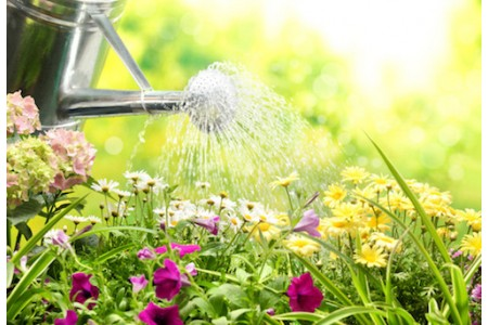 Лейки: поливаем растения дома и на участке