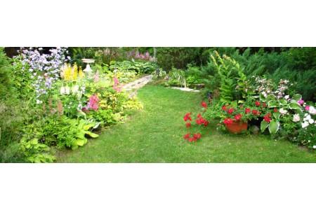 Летний период: 12 советов по уходу за садом и огородом