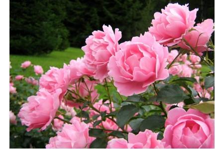 Летняя подборка цветов (фотографии и описания)