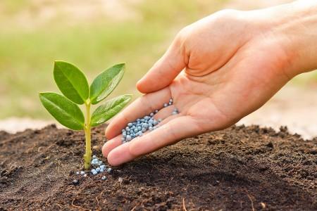 Измеряем удобрение подручными средствами