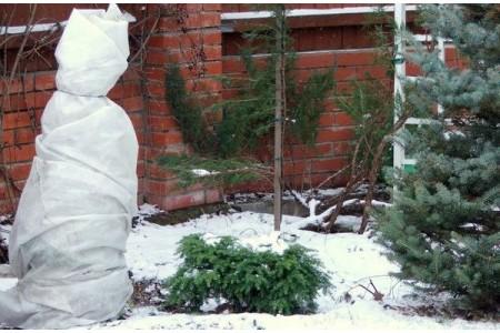 Зима: укрываем растения от холода