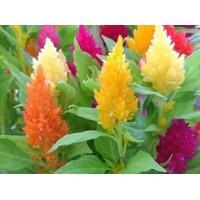 Ухаживаем за цветами в апреле
