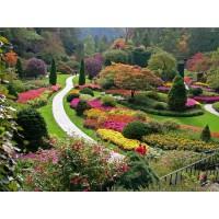 Садовые работы в августе