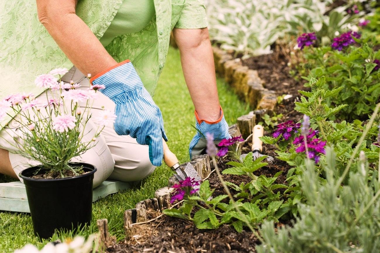 Работы в саду в июне лунный календарь