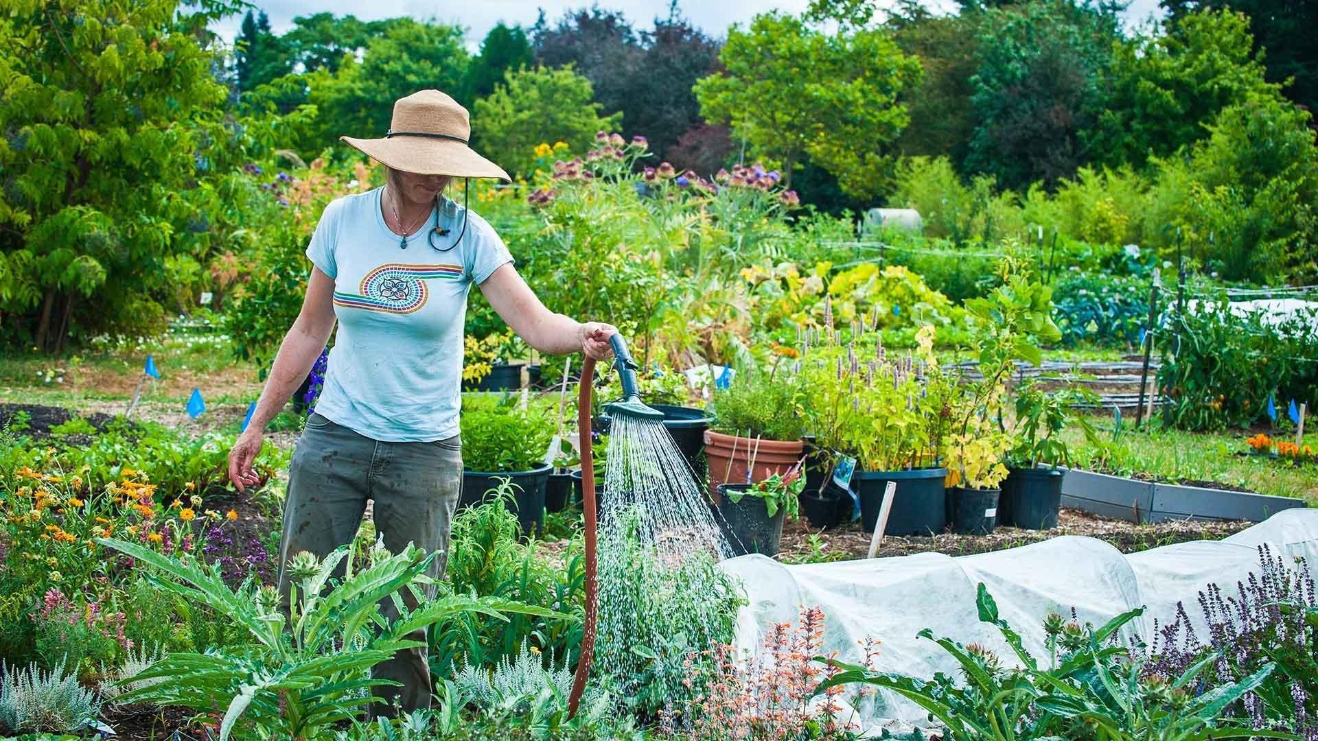 Работы в саду в августе лунный календарь