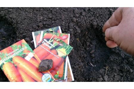 Что можно посадить в мае в открытый грунт