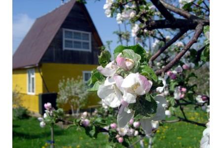 Лунный календарь для садовода и огородника на май 2017 г.