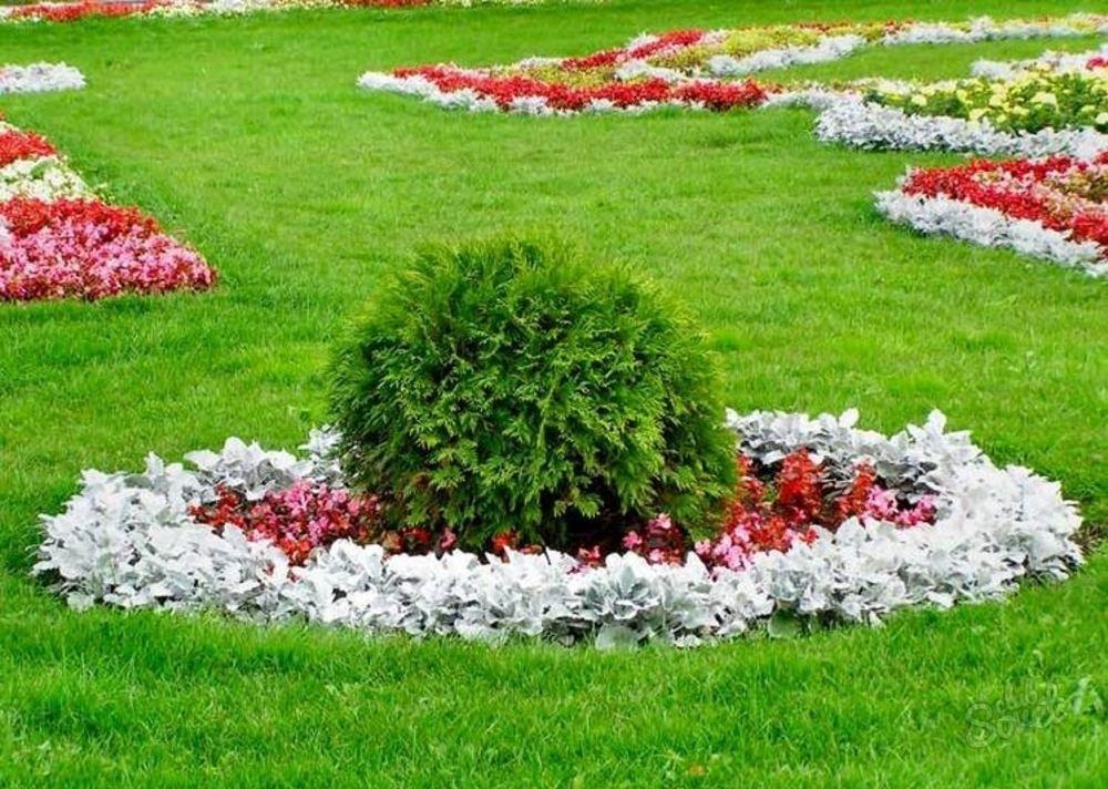 Цветы и газон на даче своими руками