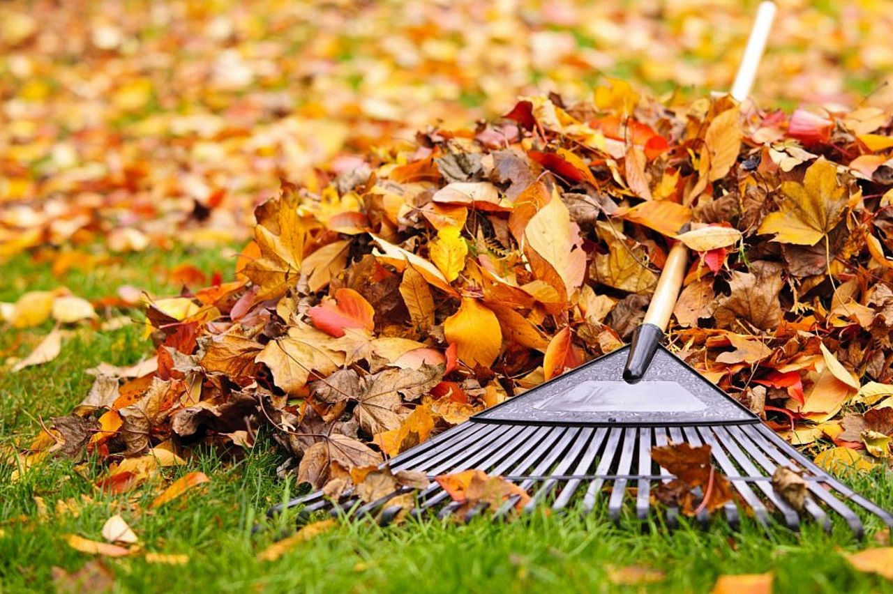 сбор листвы с газона
